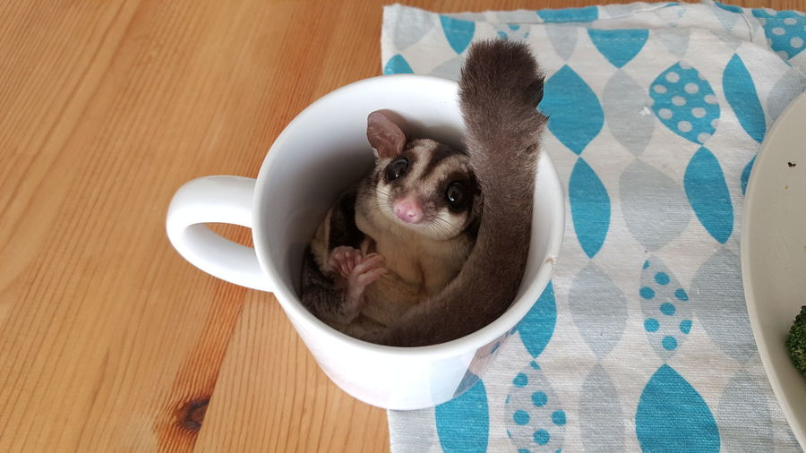 EyeEm Selects High Angle View Food And Drink No People Drink Freshness Close-up Sugar Glider Animal Cute Pet Adorable Cup