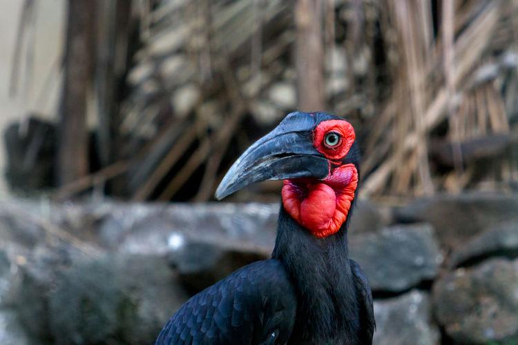 Close-up of black bird outdoors