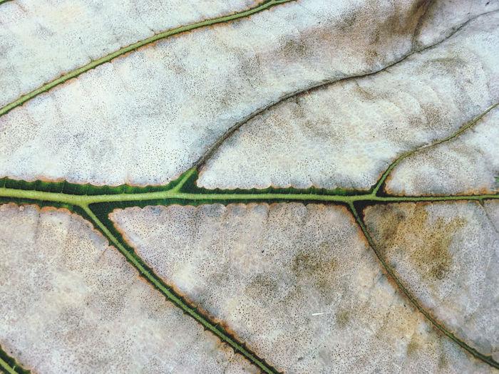 Close up leaf.