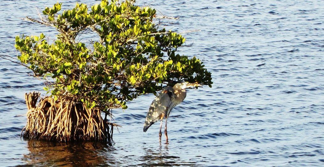 Blackpoint Wildlife Park Florida Florida Nature Florida Wildlife Bird Photography Sandhill Crane