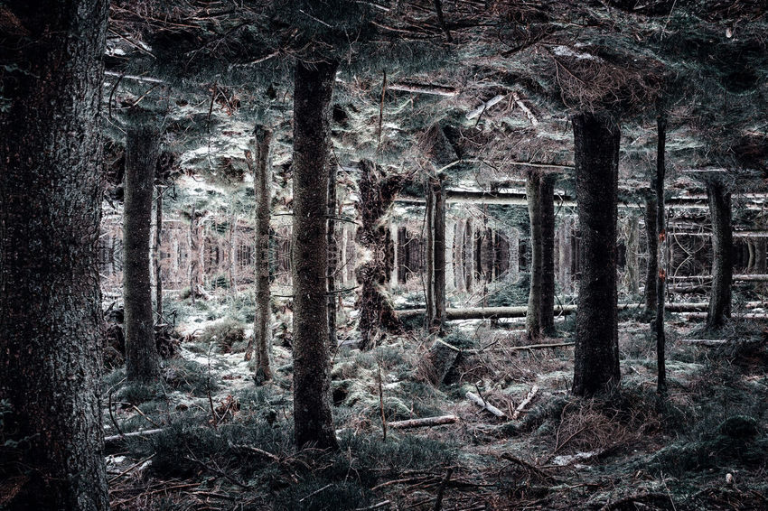 Mirror forest ExploreEverything EyeEm Best Shots EyeEm Selects EyeEm Gallery GERMANY🇩🇪DEUTSCHERLAND@ Reflection Abandoned Day Forest Forest Photography Forest Trees Germany Growth Indoors  Mirror Reflection Nature Neverstopexploring  No People Travel Destinations Tree Tree Trunk Waldlandschaft
