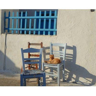 Instasize Amorgos Amorgosisland Katapola Cyclades Cyclades_islands Ig_cyclades Earlymorning  Greekcats Shadesofblue Wu_islands Wu_greece15 Wu_greece Iggreece Ig_greekshots Ig_greece Loves_greece Loves_cats Loves_animals Greekstyle Lazymorning Greecestagram Travel_greece Ig_neverstopexploring Lifeisgood keeponsmiling GooD morNiNg mr.CaT 🐱🐱🐈🐈