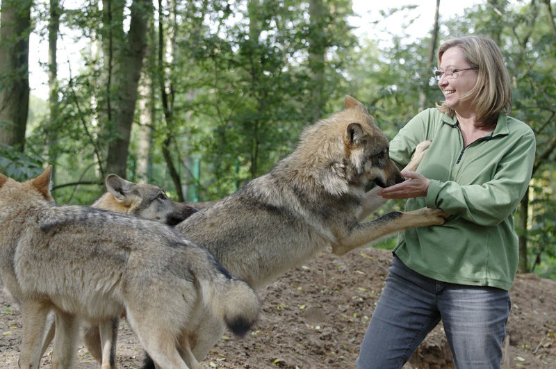 Smiling Woman Playing With Wolf In Forest