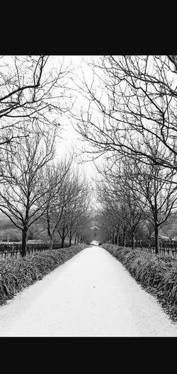 Tree Snow Bare