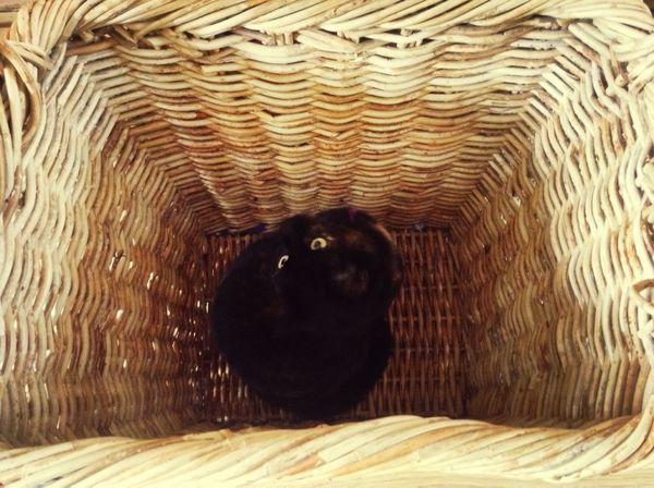 Cat Basket Lewi  Explorer