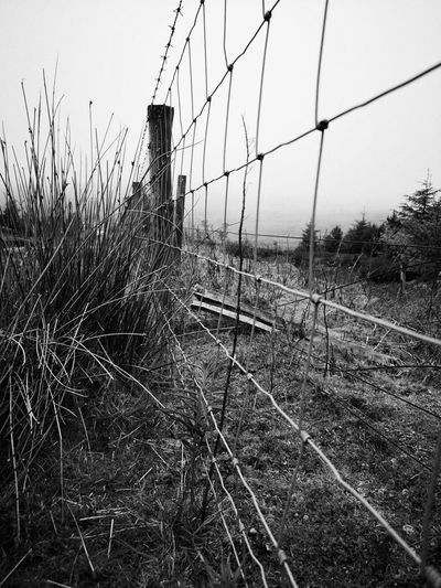 Grass and fence Grass Wild Grasses Wild Monochrome Mono monochrome photography Black And White Countryside Urban Urban Photography Sky Fence Wire Mesh Boundary Forbidden