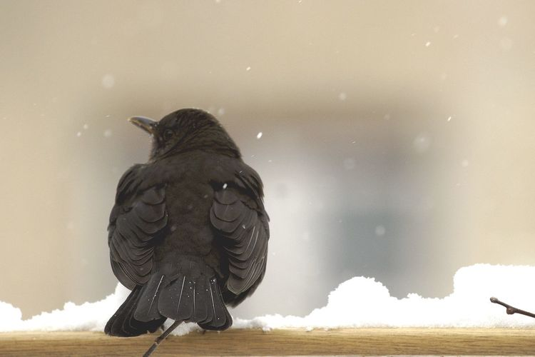 Close-Up Of Bird Perching On Snow Covered Railing