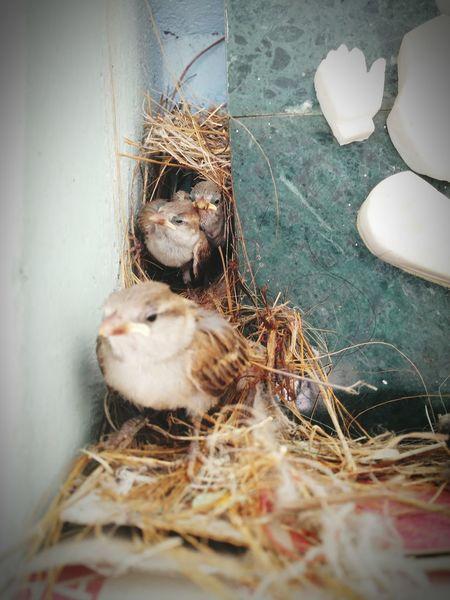 Baby Birds Beautiful Creation Lovely @EyeEmNatureLover