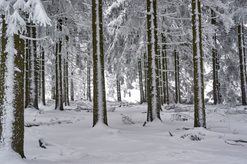 Beauty In Nature Cold Temperature Day Forest Landscape Nature No People Outdoors Scenics Snow Tranquil Scene Tranquility Tree Tree Trunk Weather Winter