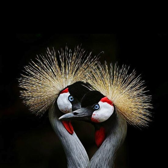 One Animal Bird Close-up Beak Focus On Foreground Animal Behavior Outdoors Nature Endangered Species Zoology Beauty In Nature