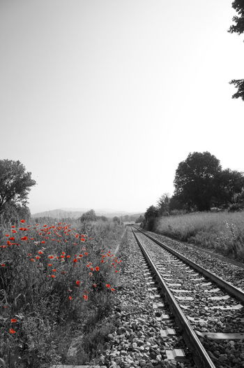 Poppy series . Railroad Track Transportation No People Day Outdoors Nature Sky Clear Sky Beauty In Nature Uncultivated Poppy Red Summer Petal Fragility Close-up Flower Rural Scene Nature Springtime Wildflower Tranquility Growth Freshness Live For The Story