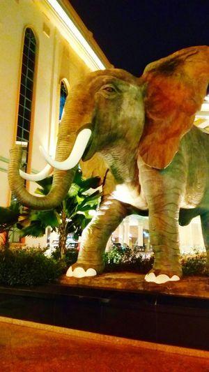 Replica Elephant Statue History Sculpture Night No People Travel Destinations Architecture Illuminated Outdoors elephant big animal Jungle beautiful