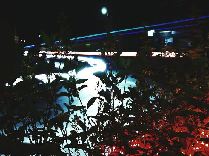 Night Leaf Tree