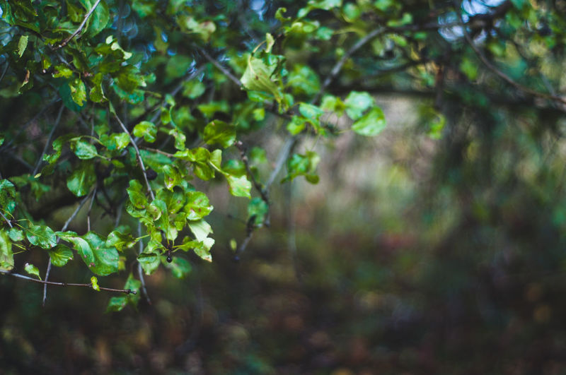 Plant Growth Plant Part Leaf Nature Beauty In Nature Green Color Day Focus On Foreground Tree Land Tranquility No People Outdoors Forest Selective Focus Branch Close-up Sunlight Freshness Leaves