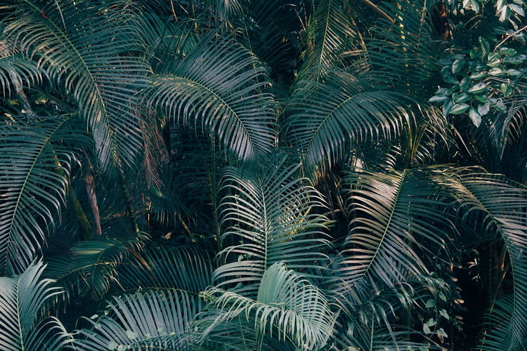 Tropical plants and trees Palm Tree Palm Leaf Palms Palm Palm Tropical Tree Green Color Tree Leaf Plant Beauty In Nature Growth No People Backgrounds Tranquility Palm Tree Tropical Climate Palm Leaf Full Frame Plant Part