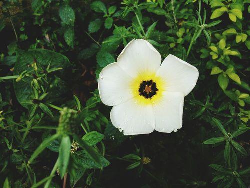 Flower Flower White Beauty In Nature Waterdrops Nature Flor Gotas Rocío Blanca Amarillo Yellow Grass Hierba Petalos Petals