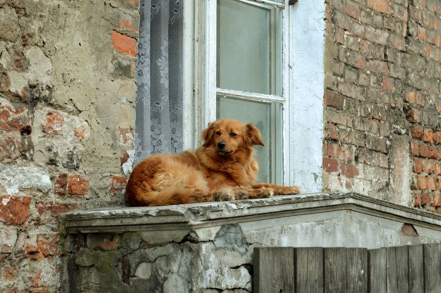 Dogs Poland Roof Abandoned Animal Themes Architecture Building Exterior Built Structure Close-up Dog Domestic Animals Door House No People One Animal Pets Weathered Window