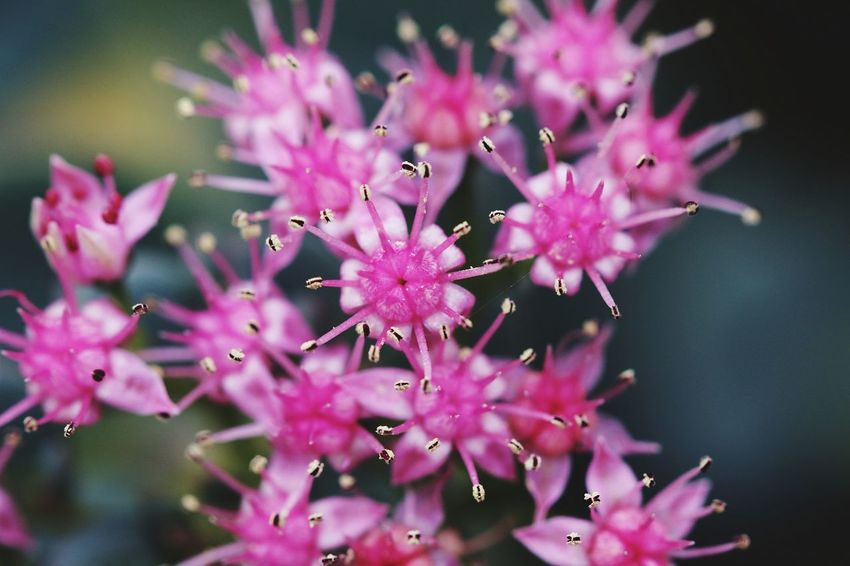 Art Macro Macro Photography Flower Head Flower Colony Pink Color Bird Insect Purple Close-up Animal Themes Plant