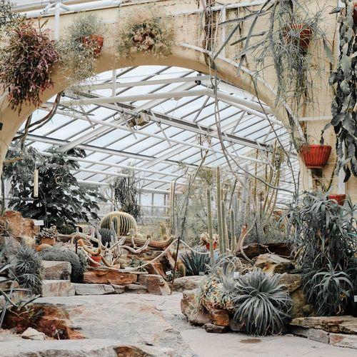 🌵 Plants And Flowers Plants Greenplants Botanischer Garten Botanical Botanical Garden Botanical Gardens Cactus Garden Cactus Flower Cactus Tree Greenhouse