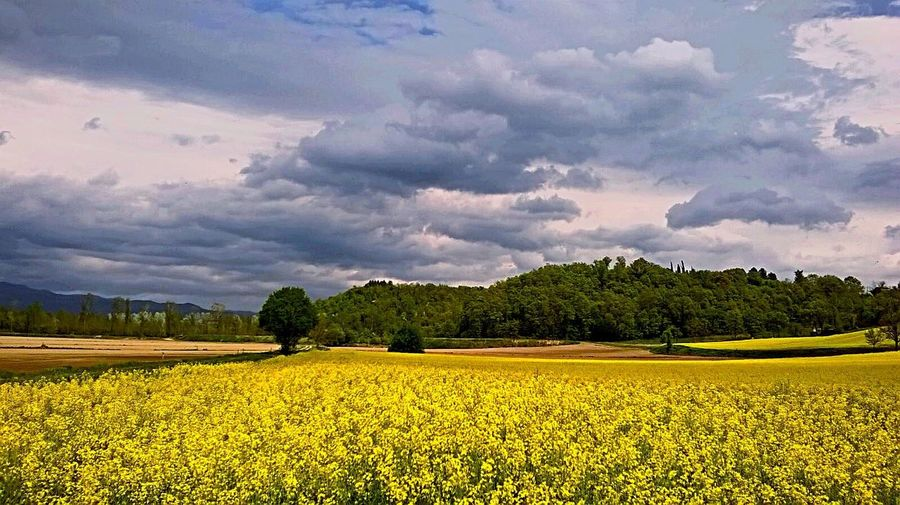 Flowers and trees under a cloudy sky Landscape, Flowers, Trees, Clouds, Countryside, Tuscany