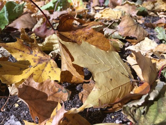 Abundance Autumn Beauty In Nature Close-up Fallen Leaf Leaves Nature No People Outdoors