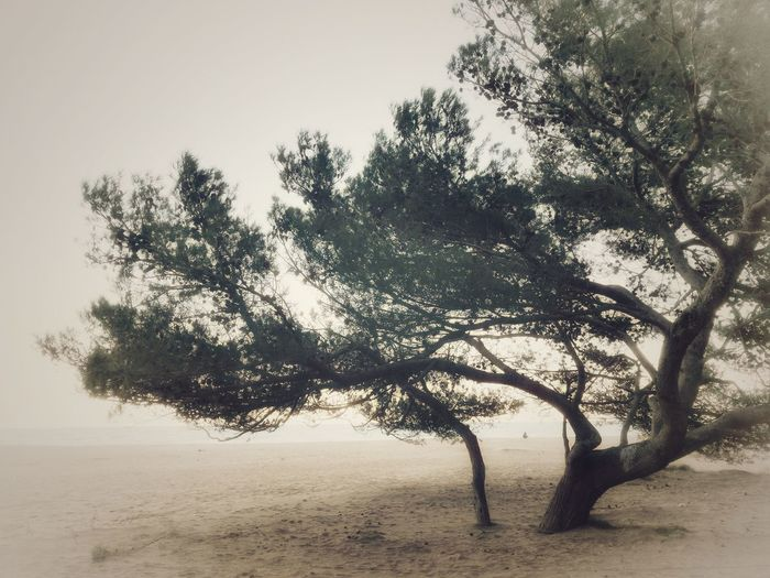 Tree Nature Outdoors Beach Beauty In Nature Landscape No People Sky Sand Branch Growth Day Capture Moment EyeEm Nature Lover Vintage Moments Colours Autumn Leaves Autumn Colors Nature Taking Photos Relaxing Capturemoment