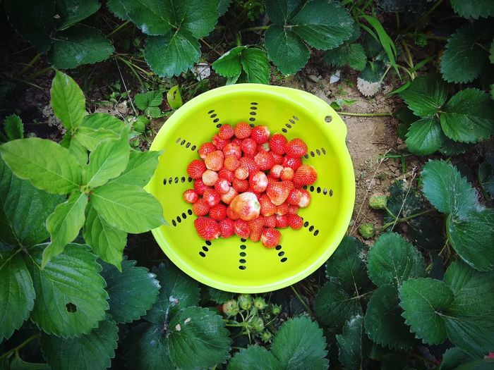 Strawberry Green Color Healthy Eating Nature Outdoors
