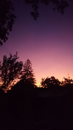 Silhouette No People Sky Sunset Astronomy Tree Beauty In Nature Star - Space Scenics Moon Astrology Sign Constellation Outdoors Relaxing Town Indoors  Nature Space Landscape Sunlight Pink Color Lastsummerdays Tree Area Night