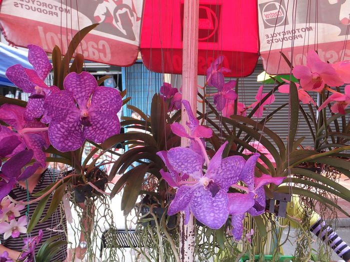 Orchids Beauty In Nature Blooming Borneo Close-up Composition Flower Flower Head Flowers Focus On Foreground For Sale Fragility Full Frame Green And Purple Flower Kota Kinabalu Malaysia Market Market Stall Multi Colored Nature No People Orchids Outdoor Photography Plants Sabah Tourist Destination