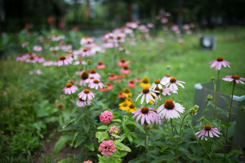20170709 Canoneos6d Colorful Flower Rainy Day Seoul Seoul Forest Sigma35mm1.4art