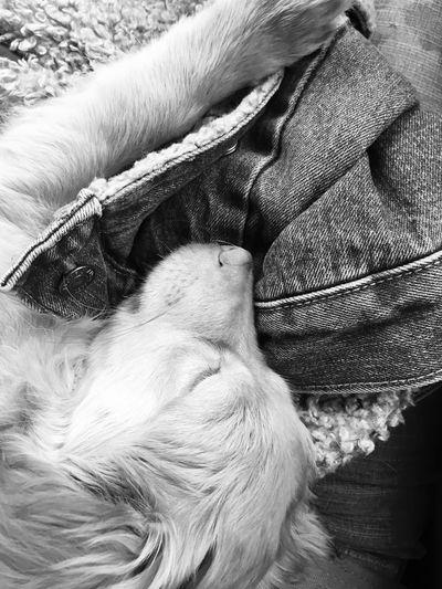 High angle view of dog sleeping on blanket