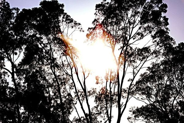 MMJ PHOTOGRAPHY Trees Sunlight ☀ Captured Landscape #Nature #photography MMJ