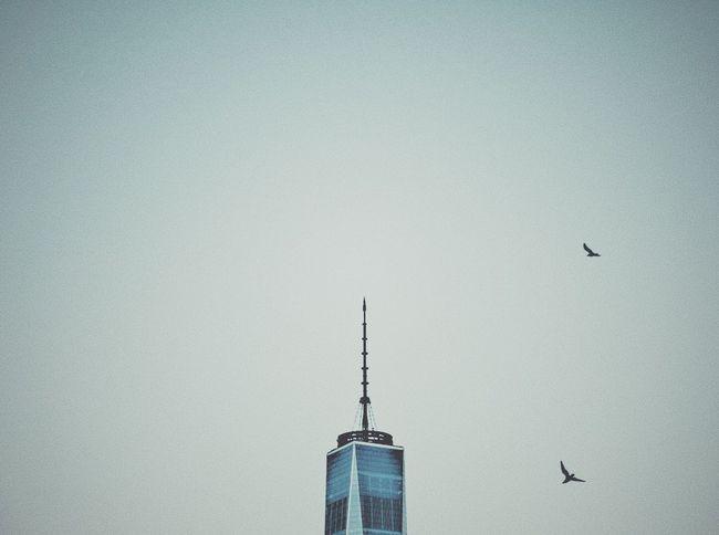 World Trade Center New York New York City Minimal Minimalism Eyeem Philippines Eyeem Travel Copy Space Flying Bird Architecture Clear Sky