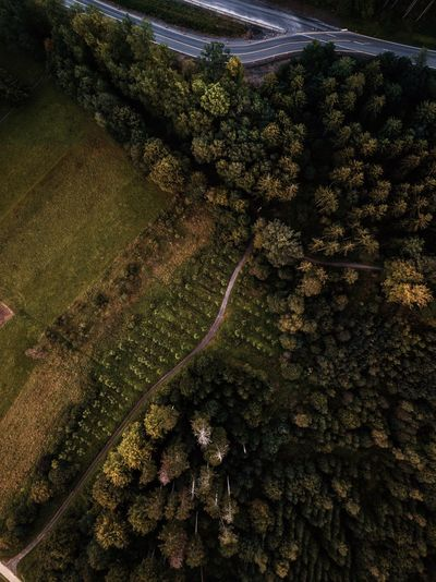 Aerial View Landscape Tree Forest Nature Beauty In Nature High Angle View Rural Scene Road Outdoors Planet Earth Polarpro Birdseye Birdseyeview Outdoors Photograpghy  Wildlife & Nature Germanroamers Dronephotography Mavic Pro Drone Dji Drones Sky Droneshot Drone  Outdoor Photography