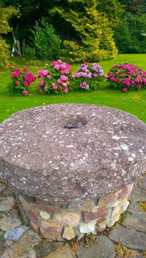 Mill stone Flower Nature Growth Day Outdoors Plant Beauty In Nature No People Pink Color Flowerbed Grass Fragility Flower Head Freshness Tipperary Clogheen Tranquility Park - Man Made Space Green Color Beauty In Nature Growth Tree Close-up Home Sweet Home