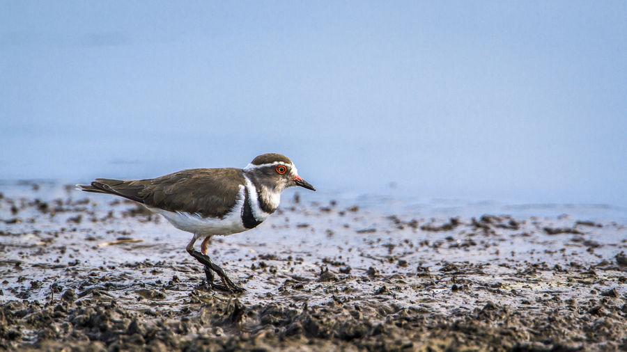 Bird wading at beach