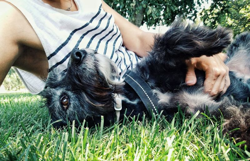 Midsection of man reclining by schnauzer on grass at park