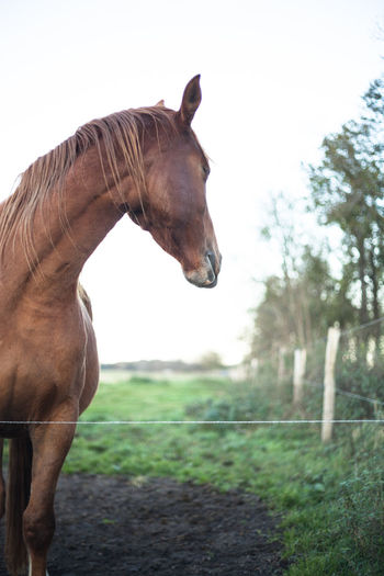 Horse standing in field against sky