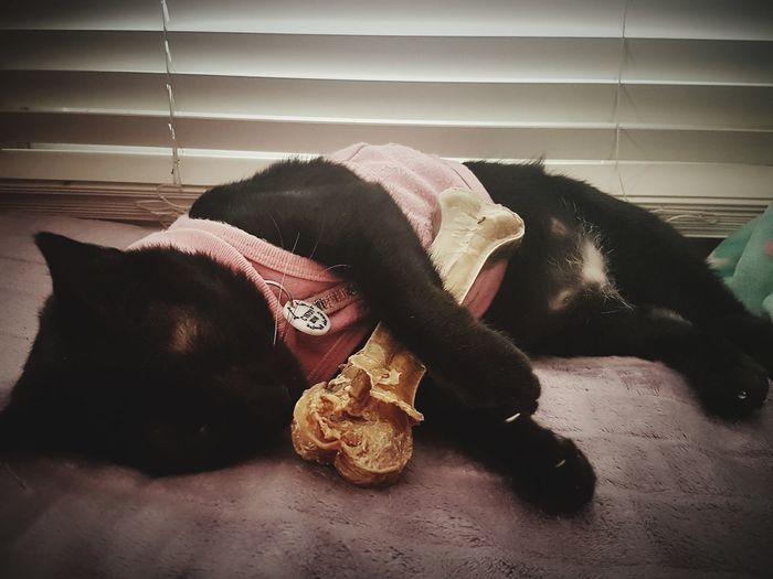 Cats Of EyeEm Catoftheday Cats 🐱 Cat Lovers Blackcatsofinstagram Blackcatsaregood Blackcatsaregoodluck 😻my Sweety Cat😻 Blackcatbeauties Blackcatsclub Sleeping Cat On Worldcatday ;-) Sleepingcat
