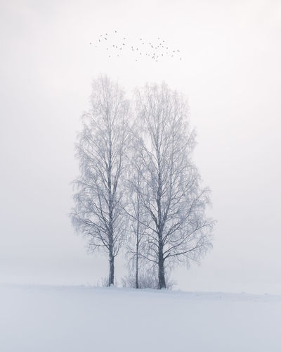 Beautiful fog landscape with silver birch and flying birds at winter morning in Finland Cold Temperature Snow Tree Winter Beauty In Nature Tranquility Scenics - Nature Snowing Isolated Branch No People Outdoors Tranquil Scene Bare Tree Blizzard Landscape Finland Flying Bird Bird Wildlife Misty Mystic Foggy Birch Morning Light