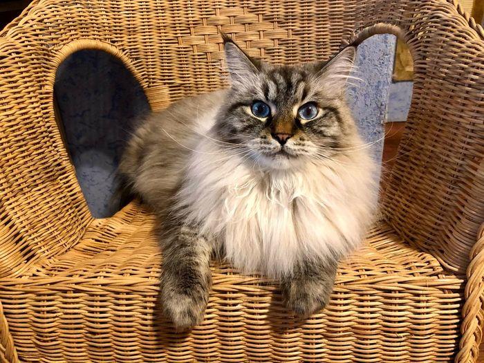 Portrait of cat in basket