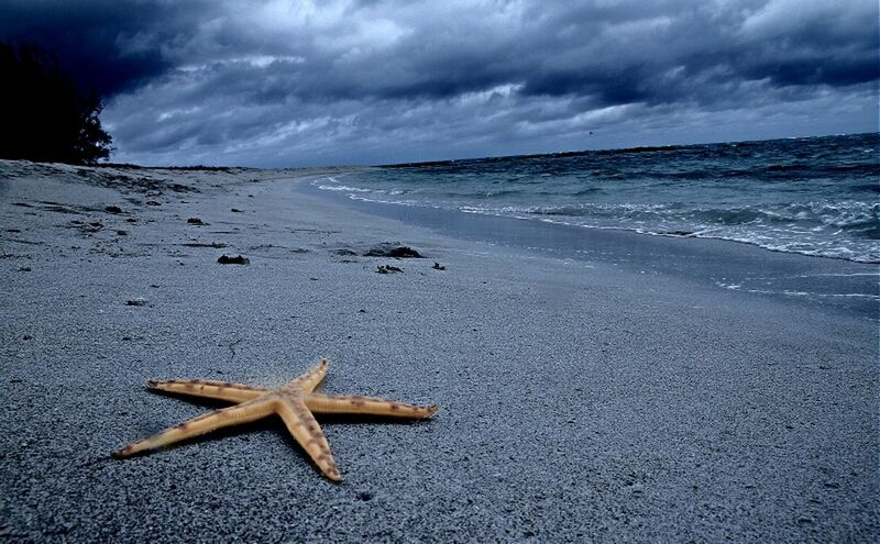 Wish Upon a Fallen Star Clouds And Sky Ocean Starfish  Eye4photography  Beach