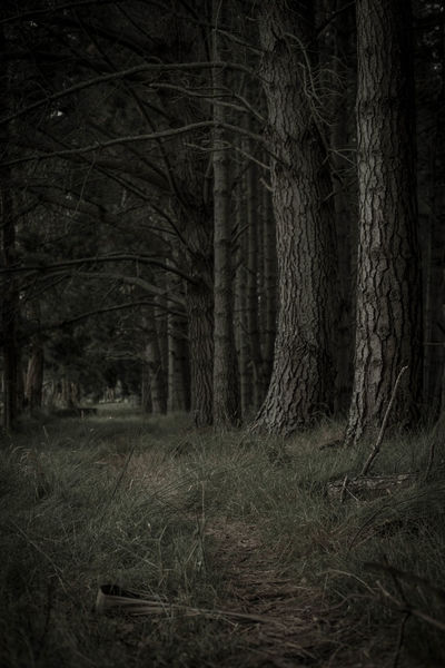 Ceepy Check This Out Everyday Joy Evil Forest Spooky