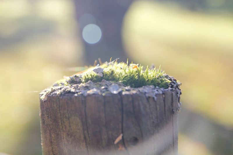 Focus On Foreground No People Day Nature Wood - Material Selective Focus Plant Outdoors Growth Green Color Tree Stump Bark Tree Sunlight Textured  Cold Temperature Fence Post Wooden Post EyeEmNewHere