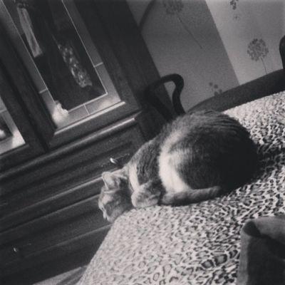 Спит сладко^^