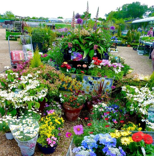 Garden Centre Flowers & Plants Flowers Plants Colourful