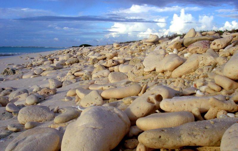 Venezuela Los Roques Pebbles Beach