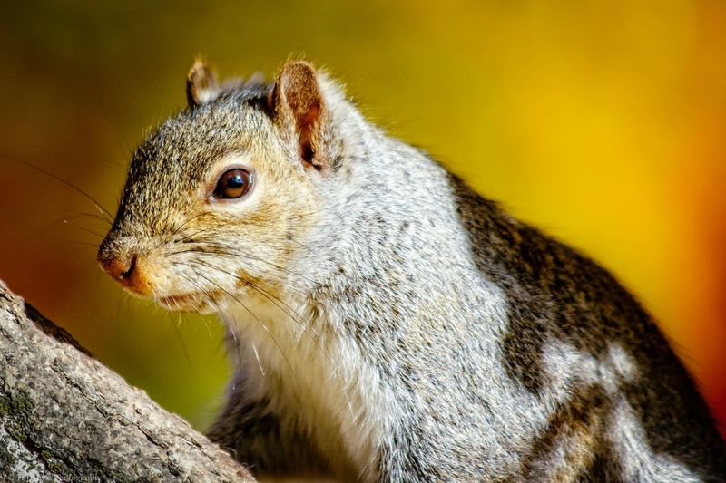 Well, who the hell else are you talking to? Squirrel! Squirrel Photo Squirrel Closeup Squirrels Squirrel Nature On Your Doorstep Wildlife Photography Rodentlove Canon 7D MarkII Canon EF 100-400 L IS USM