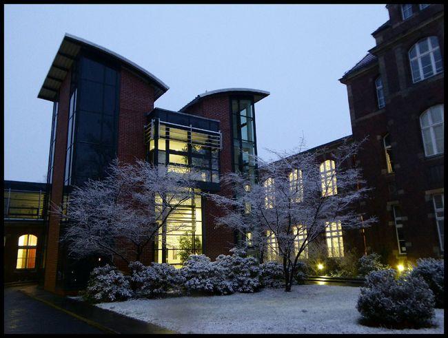 Fresh falling snow Snow Night Lights Winter Winter Trees