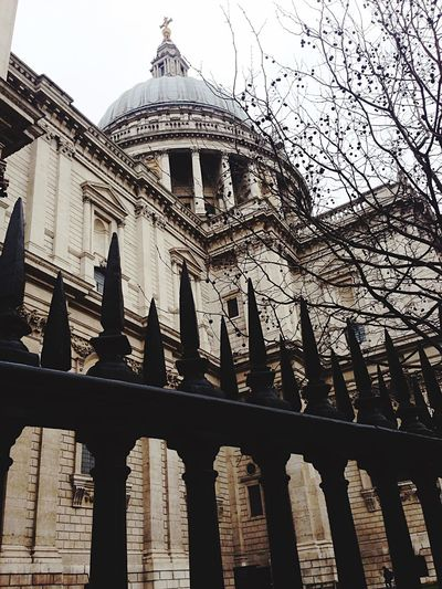 Architecture Church Trees City London St Paul's Cathedral London Lifestyle